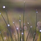 Morning Dew Light Show by BigRPhoto