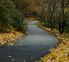 The Long and Winding Road by hockeynyr35
