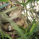 cat in grass by Louise LeGresley