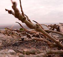 Nature vs Mont st Michel by gingergems
