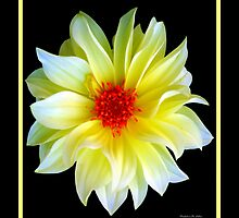 YELLOW DAHLIA by Madeline M  Allen