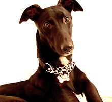 The Lurcher by James Stevens