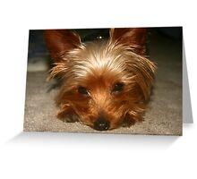 Lonley Pup Greeting Card