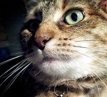 Tabby cat  by Louise LeGresley