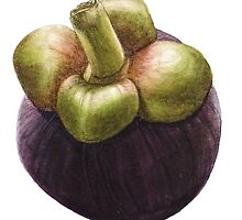 Single Mangosteen by Denise Ramsay