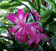 purple flower by antwilliams