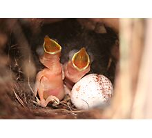 Just Hatched Photographic Print