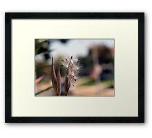 Natures Simplistic Beauty Framed Print