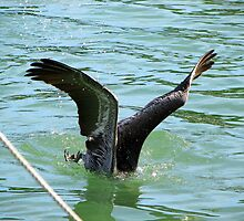 Pelican Diving for a Fish by Deborah Stewart