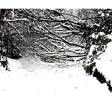 SNOW SCENE 5 Photographic Print