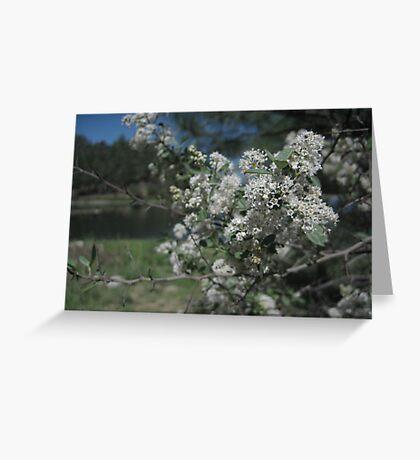 Goldwater Lake, Prescott, Arizona Greeting Card