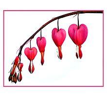 Bleeding Hearts by Ryan Houston