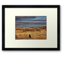 Raven at the Petrified Forest Framed Print