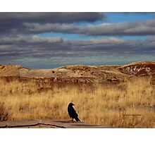 Raven at the Petrified Forest Photographic Print