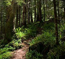 Trail to Green Lake - Mt. Rainier N. P. by Mark Heller