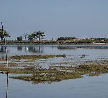 Le Cap Ferret Peninsula by 29Breizh33