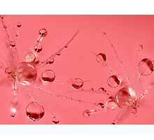 Champagne bubbles Photographic Print