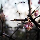 last blossom by miclile