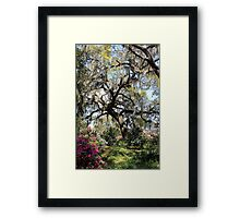 Beauty In The Trees Framed Print
