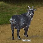 Hattie Goat by Hank Stallings