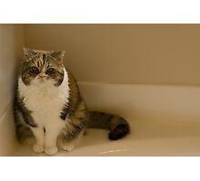 Grumpy Gracie Photographic Print