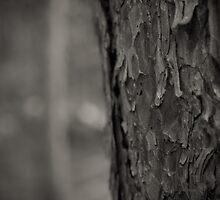Pine Tree Bark Macro by heartlandphoto