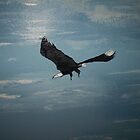 eagle soaring.... by cherlene50