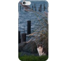 Cat at the Bay iPhone Case/Skin