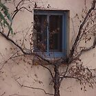 Window and Tree ... Colorado Springs by dfrahm