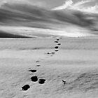 The Path by Peco Grozdanovski