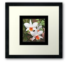 Painted Orchids Framed Print