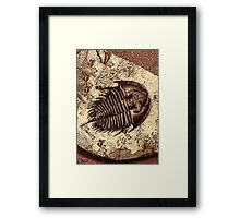 The Fossil Framed Print