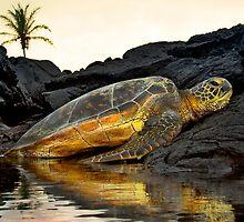Turtle resting by Yves Rubin
