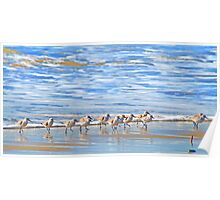 We're following the leader... Sandpipers in Goleta Beach California Poster