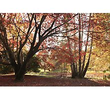 An kaleidoscope of fall color Photographic Print