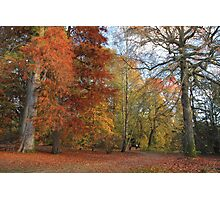 The albana walk, the perfect stroll for fall colors  Photographic Print