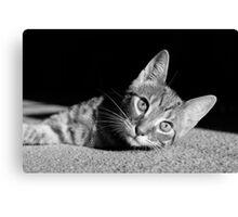 Kitten - Monochrome Canvas Print