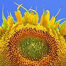 Sun Bather by Lance Leopold