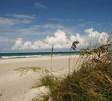 Longboat Key, FL 2 by brandy lacroix