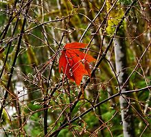 Fall leaf capture - photo by RES, posted by Alex Skelly by axieflics
