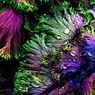 Nature's Color by © Joe  Beasley IPA