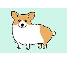 Cute Corgi Puppy Dog Photographic Print