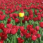 Yellow in a sea of Red by Valerie