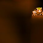 Tree Frog by doorfrontphotos