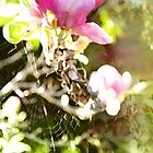 Spider Web by Absurd  Digital Imagery