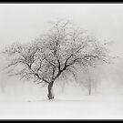 The Sound of Snow by mymamiya