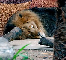 Cat Nap by Ashleigh Robb