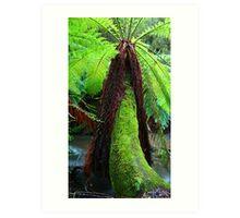 Rainforest Fern Art Print