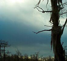 Sun and Rain by steini
