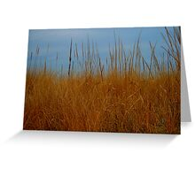 Dune Grass in Winter Greeting Card